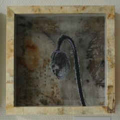 Sophie Maechler: Herbarium II